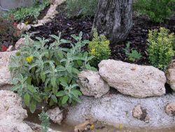 Le piante aromatiche possono trovare anche una sistemazione interessante  nel giardino roccioso, invece che nei soliti vasetti posti spesso in  posizione poco