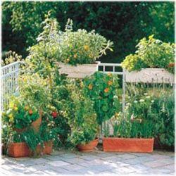 Il frutteto sul terrazzo - Terrazzi arredati e fioriti ...