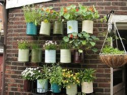 L\'orto in balcone: i giusti abbinamenti delle piante nei vasi