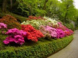 Una siepe per disegnare il paesaggio for Disegnare un giardino